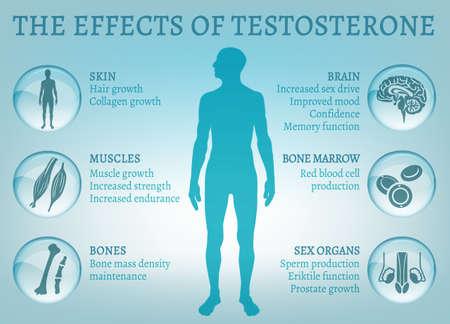 Testosterone Effects Infographics Stok Fotoğraf - 86083902