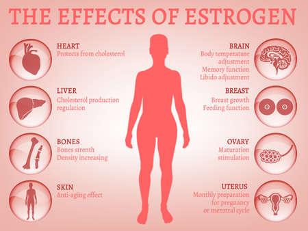 Estrogen effects Infographic. Illustration