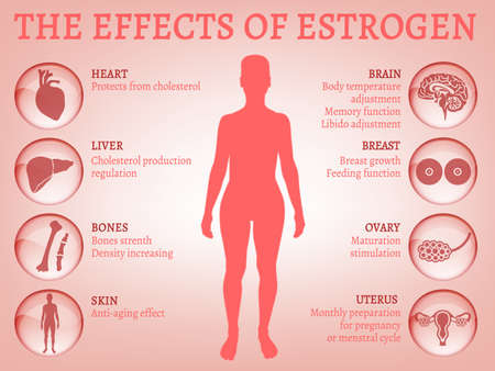 Estrogen effects Infographic. Illustration