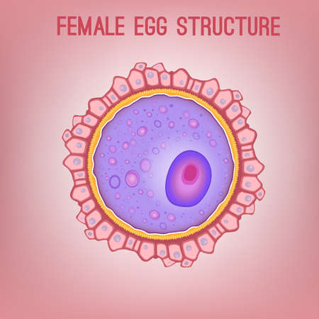 Female egg structure