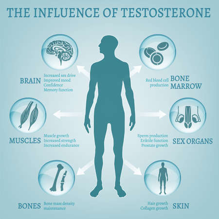 Testosterone effects Infographic image isolated on a light blue background. Male hormone and it s role in human body. Scientific, educational and popular-scientific concept.