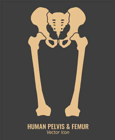 Human male anatomy icon. Pelvis and femur image in a flat style. Vector illustration in beige colour isolated on a dark grey background.