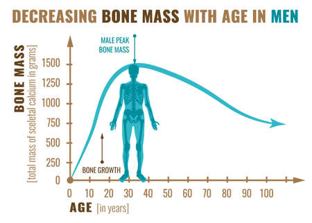 Decreasing bone mass with age in men. Detailed infographic in beige, brown and blue colors isolated on a white background. Vector illustration. Healthcare and medicine concept. Illustration