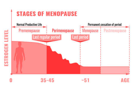 Stages and symptoms of menopause. Estrogen level average percentage from the birth to the age of eighty years. Medical info-graphic useful for an educational poster graphic design. Vector illustration.  イラスト・ベクター素材
