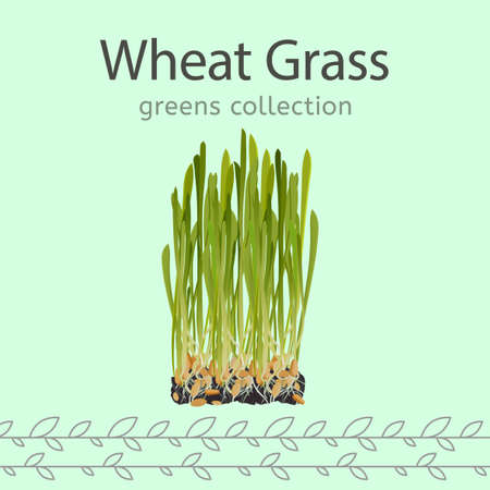 The wheat grass image isolated on a light green background. Greens collection. Vector illustration Ilustração