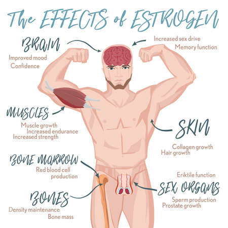 Testosterone effects Infographic image isolated on a light blue background. Male hormone and it s role in human body. Scientific, educational and popular-scientific concept. Vector Illustration