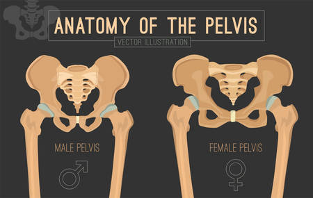 Male vs female pelvis. Main differences. Detailed vector illustration isolated on a dark grey background. Medical and anatomical concept.