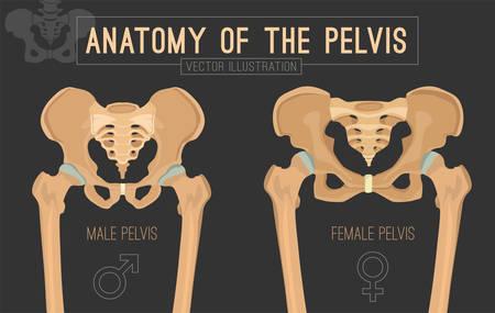 Mannelijk versus vrouwelijk bekken. Belangrijkste verschillen. Gedetailleerde vectorillustratie geïsoleerd op een donkergrijze achtergrond. Medisch en anatomisch concept. Vector Illustratie