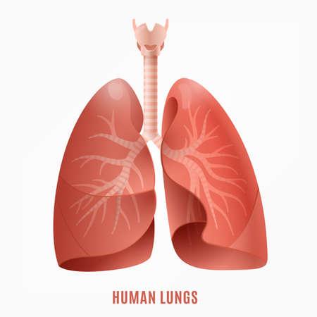 Afbeelding van de menselijke longen. Geïsoleerde vectorillustratie in roze kleuren op een witte achtergrond.