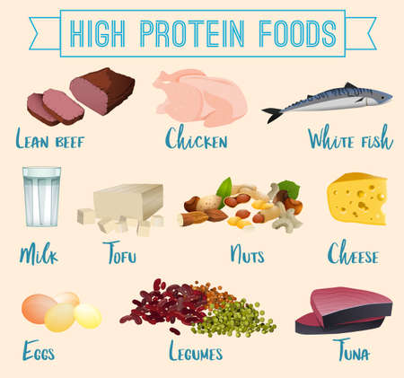 High protein foods set. Lean beef, chicken, white fish, eggs, dairy products and other healthy food. Vector illustration isolated on a light background.