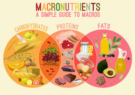 Main food groups - macronutrients. Carbohydrates, fats and proteins in comparison. Dieting, healthcare and eutrophy concept. Vector illustration isolated on a lighr beige background. Landscape poster. 스톡 콘텐츠 - 115003470