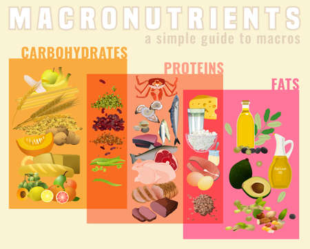 Main food groups - macronutrients. Carbohydrates, fats and proteins in comparison. Dieting, healthcare and eutrophy concept. Vector illustration isolated on a light beige background. Landscape poster.