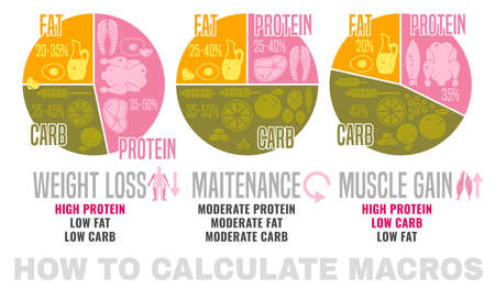 Crafting your macronutrient ratio. Fat loss, bodybuilding and health maintenance diets diagrams. Colourful vector illustration isolated on a white background. Healthy eating concept.