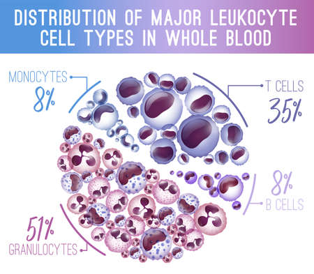 Major leukocytes types scheme. Editable vector illustration with blood cells infographic in realistic style isolated on white background. Horisontal poster. Medical, scientific and healthcare concept. Vector Illustration