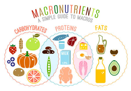 Main food groups - macronutrients. Carbohydrates, fats and proteins in comparison. Dieting, healthcare and eutrophy concept. Vector illustration isolated on a white background. Landscape poster. Иллюстрация