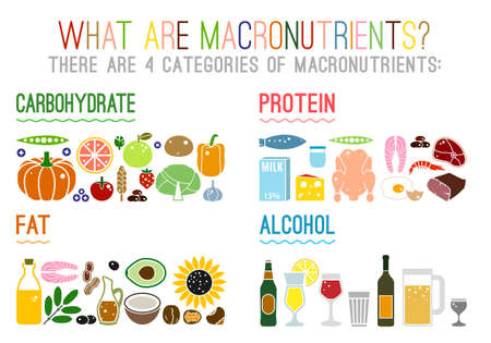 Main food groups - macronutrients. Carbohydrates, fats, proteins and alcohol. Dieting, healthcare and eutrophy concept. Vector illustration isolated on a white background. Landscape poster.