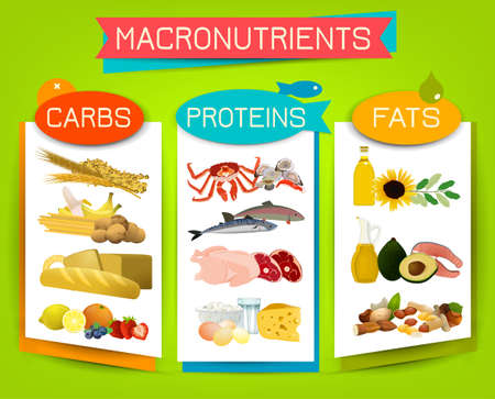 Main food groups - macronutrients. Carbohydrates, fats and proteins in comparison. Dieting, healthcare and eutrophy concept. Vector illustration isolated on a bright background. Landscape poster.