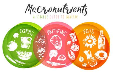 Principales grupos de alimentos: macronutrientes. Comparación de carbohidratos, grasas y proteínas. Concepto de dieta, salud y eutrofia. Ilustración de vector aislado sobre fondo blanco. Cartel de paisaje.
