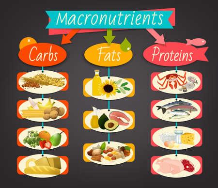 Hauptnahrungsmittelgruppen - Makronährstoffe. Kohlenhydrate, Fette und Proteine im Vergleich. Diät-, Gesundheits- und Eutrophiekonzept. Vektorillustration lokalisiert auf einem dunkelgrauen Hintergrund. Landschaftsplakat.