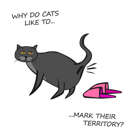 Cat Behavior Image