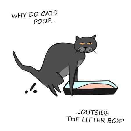 Image du comportement du chat