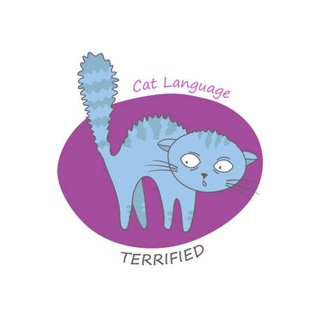 Terrified cat arching her back. Hair on end. Behavior and body language of domestic animal or pet. Funny scene in hand drawn style. Cartoon character. Colorful vector illustration on white background