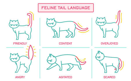 Cat behavior infographic. Domestic animal or pet tail language. Kitty reaction. Simple icon, symbol, sign. Editablel vector illustration isolated on white background. Horizontal poster