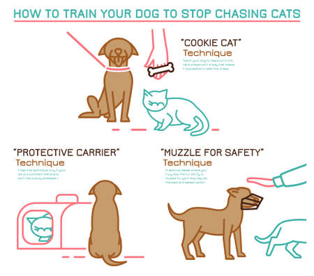 Cats and dogs training technique. Dog chasing behavior icon. Professional trainer. Domestic animal, pet language. Simple icon, symbol, sign. Editable vector illustration isolated on white background