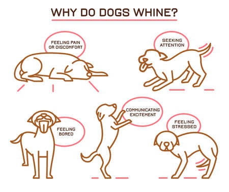 Dog Whining Poster