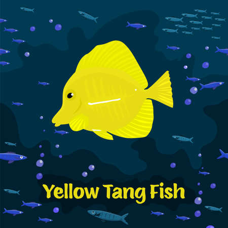 Yellow tang fish. Zebrasoma flavescens, family Acanthuridae.