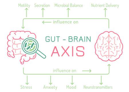 Gut - Brain AXIS landscape poster. Useful infographic. Vecteurs
