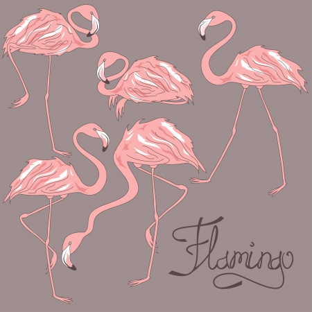 Isolated flamingos in different positions on a grey background Vector