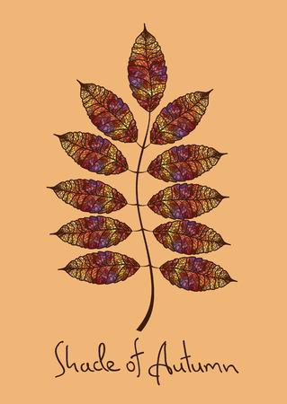 Vogelbeere: Illustration mit isolierten Herbst Rowan Blatt der bunten Mosaik