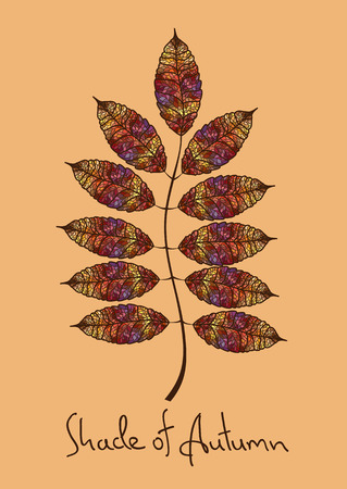 rowan: Illustration with isolated autumn rowan leaf made of colorful mosaic Illustration