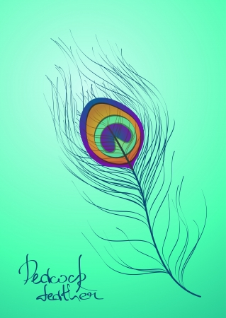 Illustration with isolated peacock feather Vector