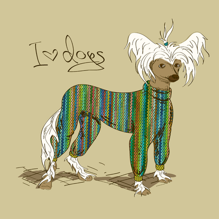 Illustration with Chinese Crested dog dressed in knitted clothes Vector