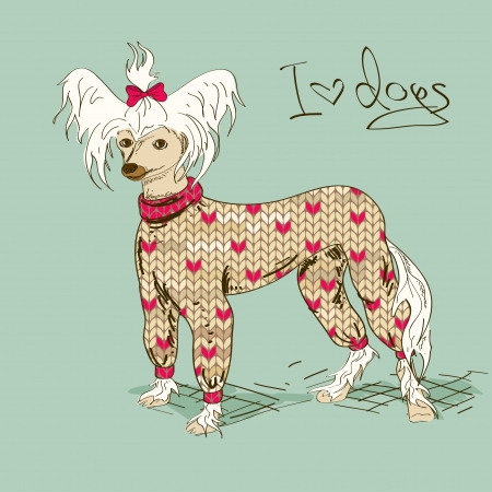 perros vestidos: Ilustración con perro crestado chino vestido con ropa de punto