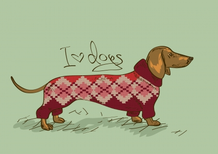 Illustration with Dachshund dog dressed in knitted clothes