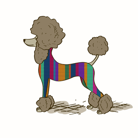 groomed: Illustration with isolated cartoon Poodle dog dressed in knitted clothes