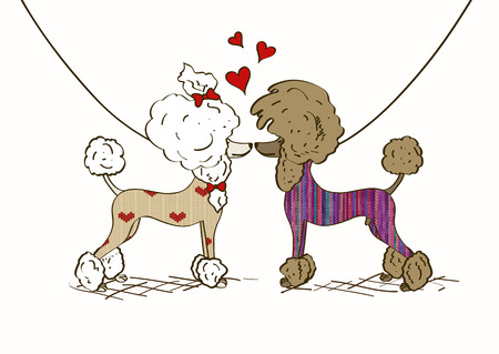 male grooming: Cartoon illustration of two lovers Poodle dogs dressed in knitted clothes