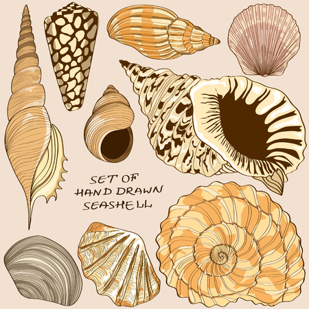 cockle: Set of isolated hand drawn seashell icons Illustration
