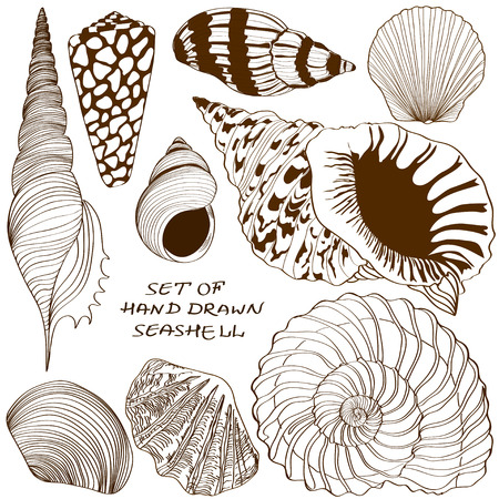 clam: Set of isolated hand drawn seashell icons Illustration