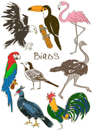 pheasant: Colorful sketch set of isolated animals
