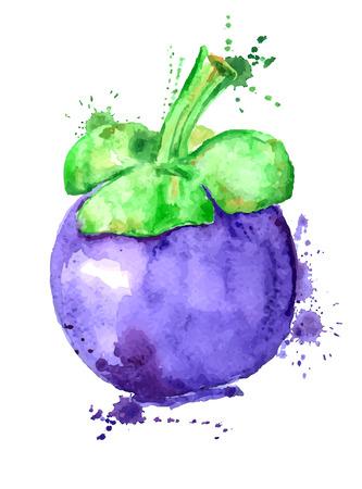 Aquarelle dessiné à la main illustration isolé mangoustan silhouette sur un fond blanc. Banque d'images - 42081436