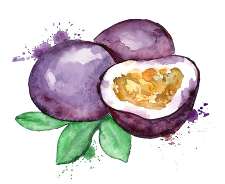 Watercolor hand drawn illustration of isolated passion fruit silhouette on a white background. Illustration