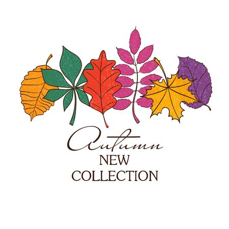 birch tree: Colorful autumn leaves on a white background. Creative autumn concept.