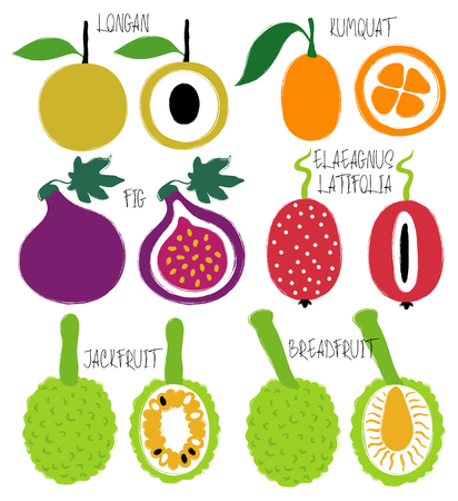 Colorful brush grunge exotic fruits icons set: longan, kumquat, fig, elaeagnus latifolia, jackfruit and breadfruit.