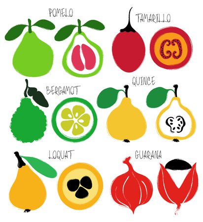 Colorful brush grunge exotic fruits icons set: pomelo, tamarillo, bergamot, quince, loquat and guarana. Illustration