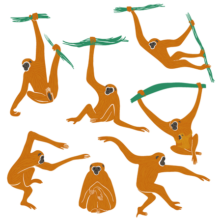Wild set of funny monkeys. Isolated Gibbon icons in action: standing, sitting, hanging, jumping. Ilustrace