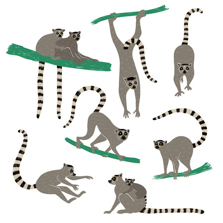Wild set of funny ring tailed lemurs. Isolated lemur icons in action: standing, sitting, hanging, jumping.
